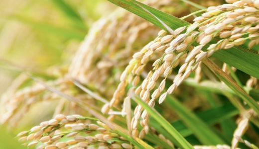 昔ながらの米ぬか洗顔が今大人気!驚きの美肌効果と今日からできる洗顔方法